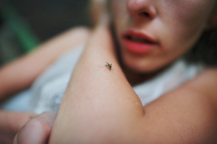 komar na kobiecym przedramieniu