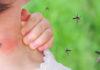 Komary atakują