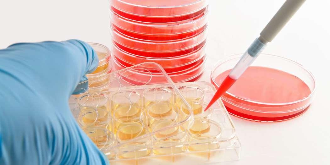 Komórki macierzyste w kosmetologiii
