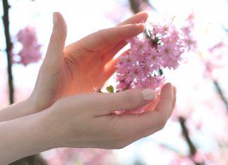 Kwiaty wiśni, piękno i delikatność