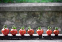 Pomidorki cherry ułożone na desce